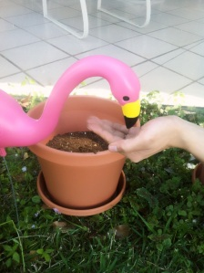 The flamingo was hungry